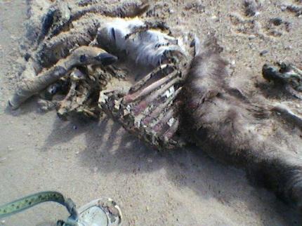 dead deer2